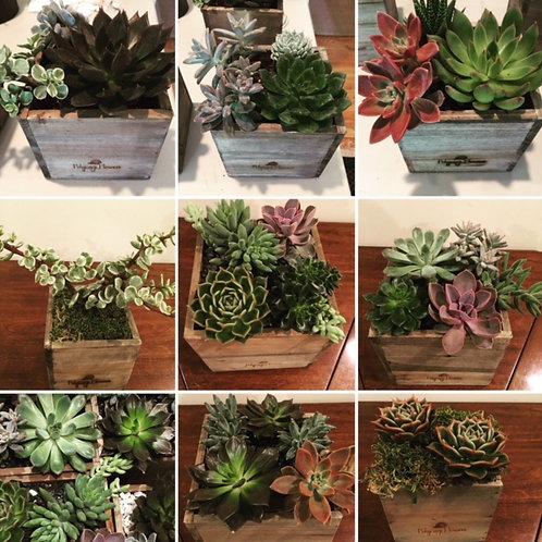 Succulents Boxes