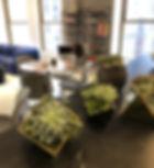 office plants decor