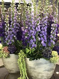 office flowers delphiniums