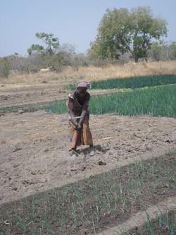 Travaux de champs à Toroba