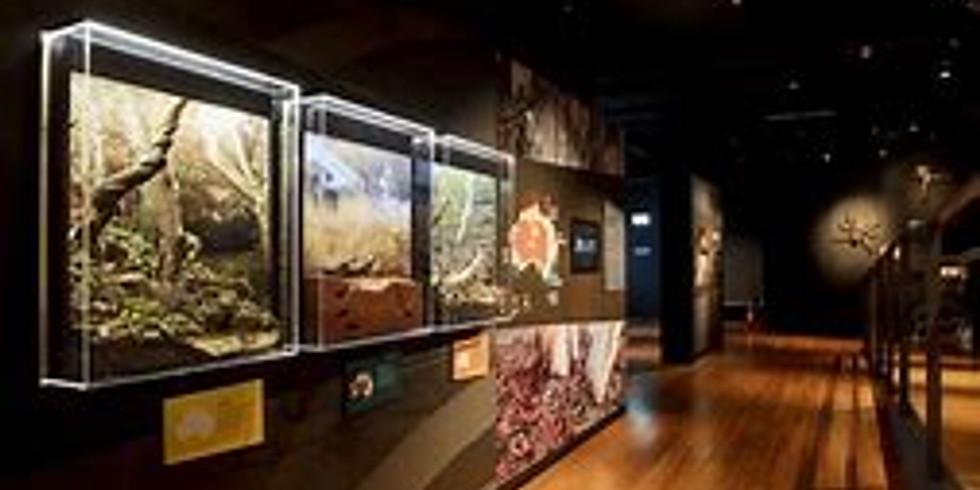 Spider Expo Brisbane Museum