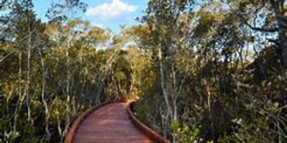 Nature walk Boondall Wetlands