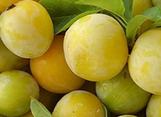 Prune Golden - par 500g - 3,80€/kg