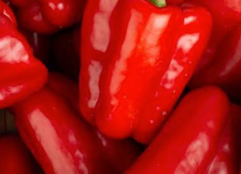 Poivron rouge - par pièce - 4,98€/kg