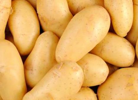 Pomme de terre BIO - par 500g - 5,80€/kg