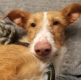 LETY - In foster in North Wales
