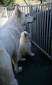 Onda la Lupa of Beautyful Whites