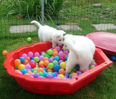 Juli 1_Akira & Amy im Ballbad auf Ballsuche_DSC_3604_kompr.jpg