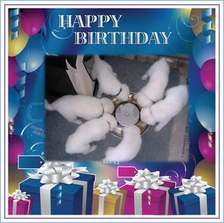 HAPPY BIRTHDAY!!! liebe A'chen