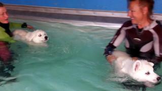 8 Wochen+6 - Schwimmen mit den Welpen