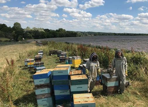 The Secret of Honey - Urban beekeeping