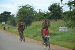 Holztransport mit Fahrrad