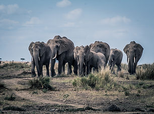 Elephantherd-5516.jpg