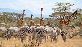 samburu-safari.jpg