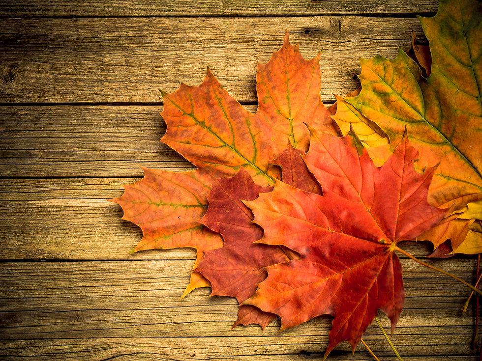 autumn-leaves-48MB679 (1).jpg