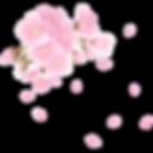 sakura_edited_edited.png