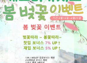 개츠비카지노 |온라인카지노 봄맞이 벚꽃 이벤트 소식