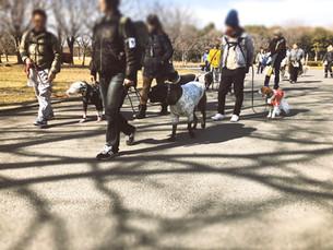 2/24(日) A-side PACK WALK 参加者募集します!