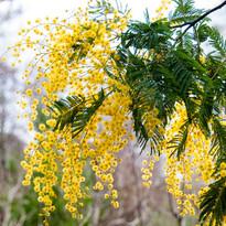 AA blooming.jpg