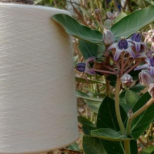 FABORG's Calotropis revolution: Vegan wool, organic farming and zero-waste solutions