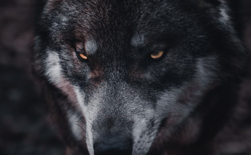 """My story """"The Pack"""" in Piker Press, out now."""