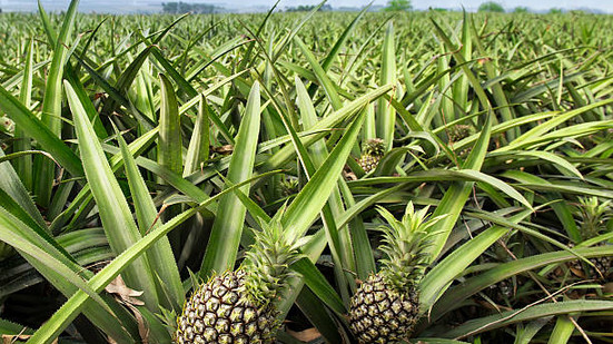 """My story """"The Pineapple Disillusionment"""" accepted by/published in The Galway Review."""