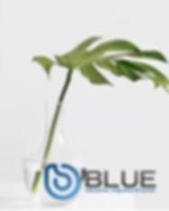 NurturingPlant_Blue.png