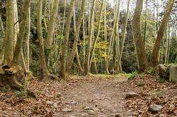 Bosc del Montseny
