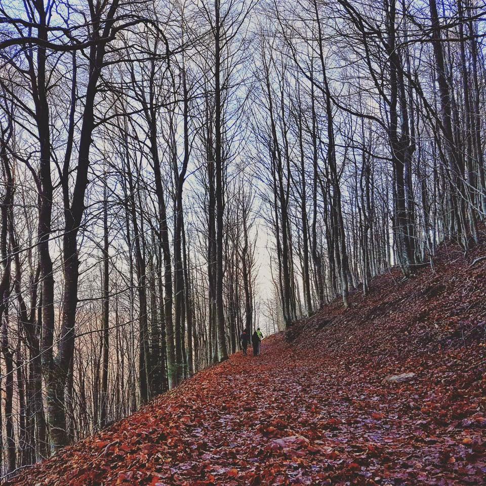 Camí de fulles El Montseny