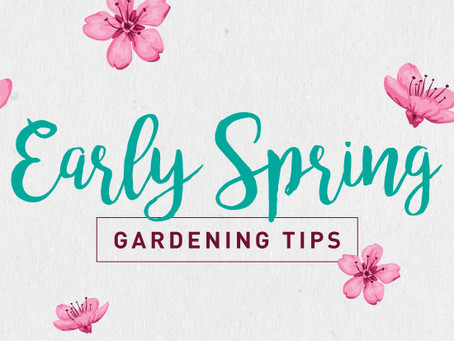 5 Early Spring Garden Tips To Kick Off the Season