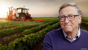 Гейтс выращивает картофель для McDonald's на землях, приобретённых через сеть подставных компаний