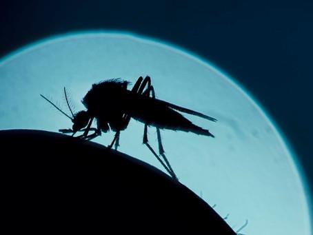 Во Флориде будут выпущены миллионы генетически модифицированных комаров уже этим летом