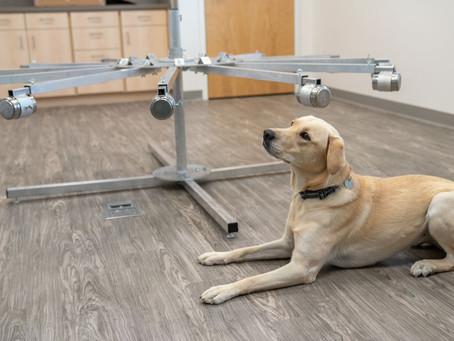 В одной из больниц Флориды появилась собака, обнаруживающая у посетителей COVID-19
