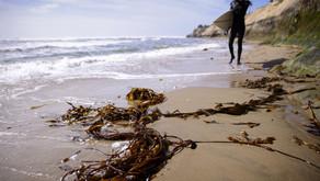 На пляжах Калифорнии появляются клещи, переносящие болезнь Лайма