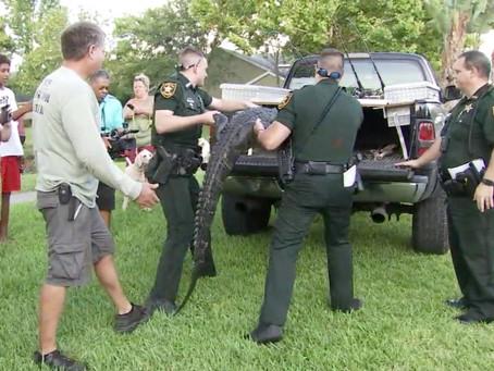 Во Флориде огромный аллигатор напал на женщину, когда она выгуливала собаку