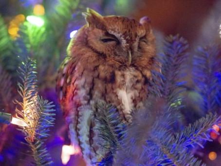 Семья из Джорджии обнаружила в своей рождественской ёлке сову