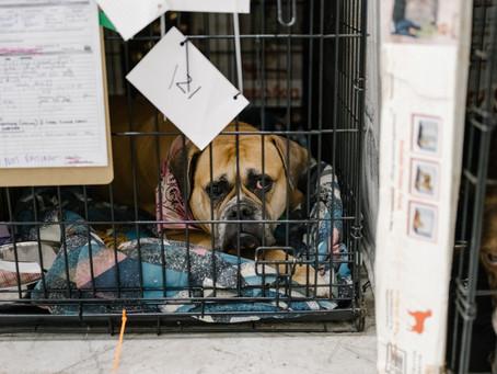 Запрет на продажу домашних животных в зоомагазинах набирает обороты