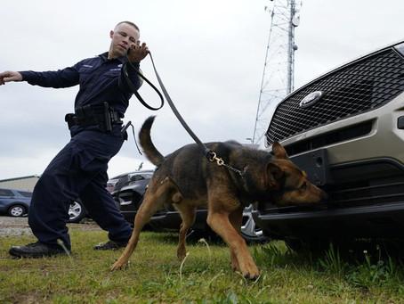 Полицейские собаки остались без работы из-за легализации марихуаны