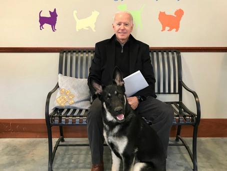 Джо Байден вывихнул лодыжку, играя с собакой