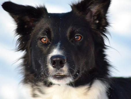Собака получила в наследство от хозяина пять миллионов долларов