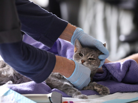 Две кошки заразились коронавирусом в штате Нью-Йорк