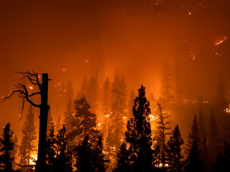 Власти Калифорнии ввели чрезвычайное положение в пяти округах из-за пожаров