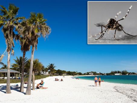 Тысячи генетически модифицированных комаров выпущены во Флориде в рамках биологического эксперимента