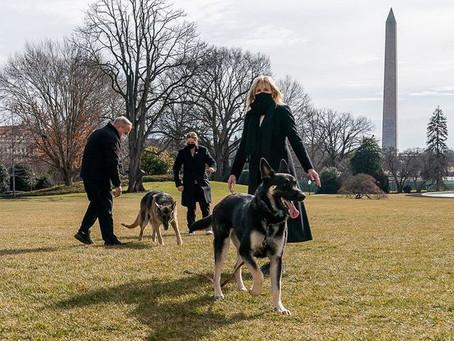 Собак Байдена выселили из Белого дома из-за агрессивного поведения