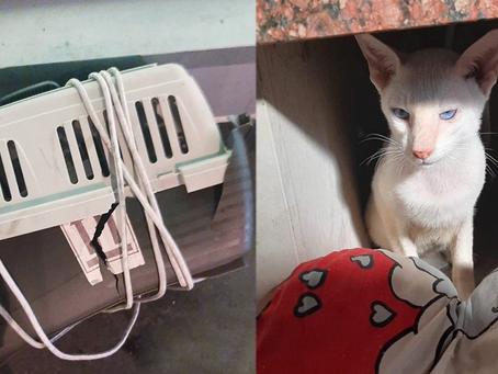 На рейсе «Нью-Йорк – Москва» погибли два кота