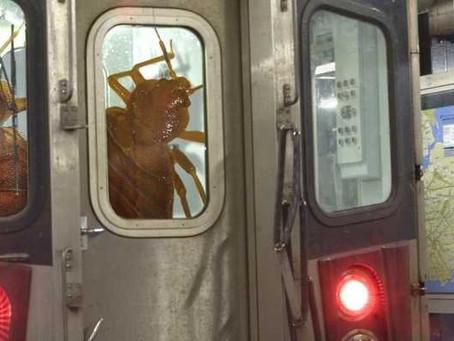 В Нью-Йорке клопы задержали поезда метро