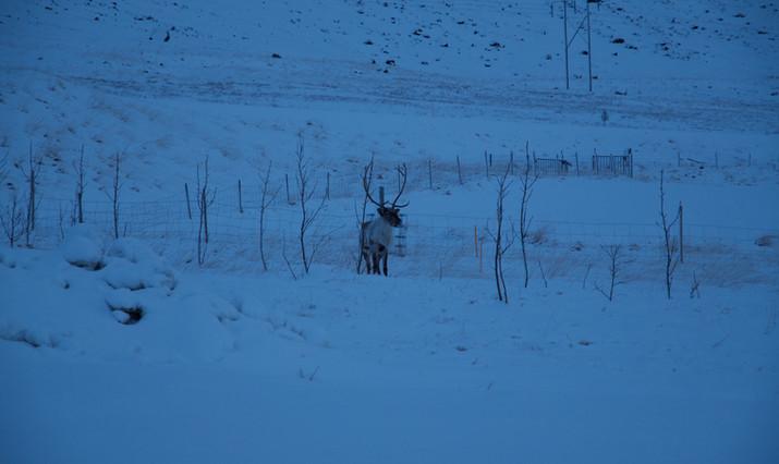 Rudolph visiting
