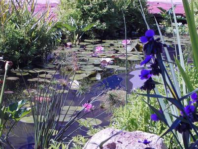 Beautiful Lillypad Aquafeature