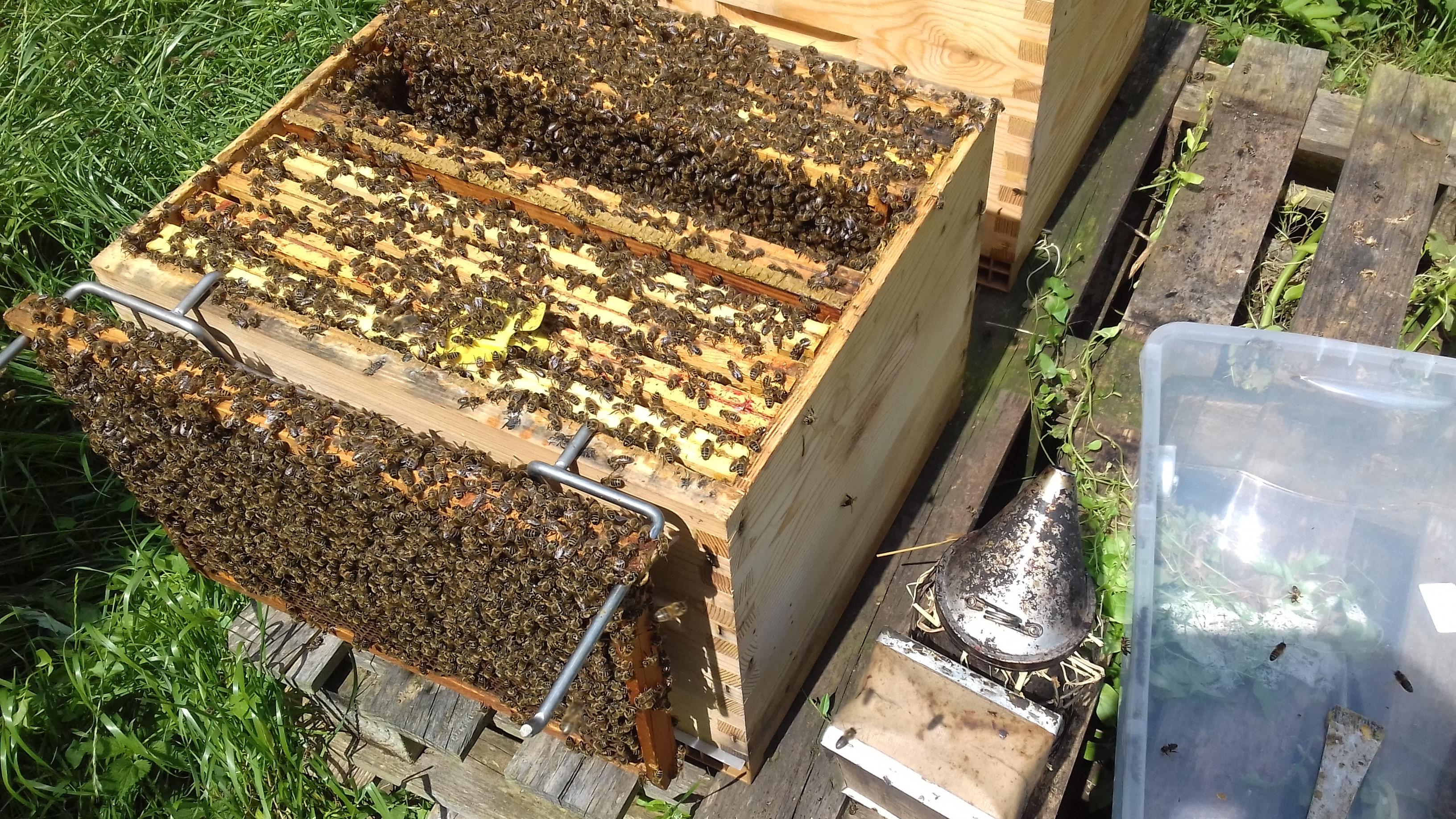 ruche pleine d'abeille
