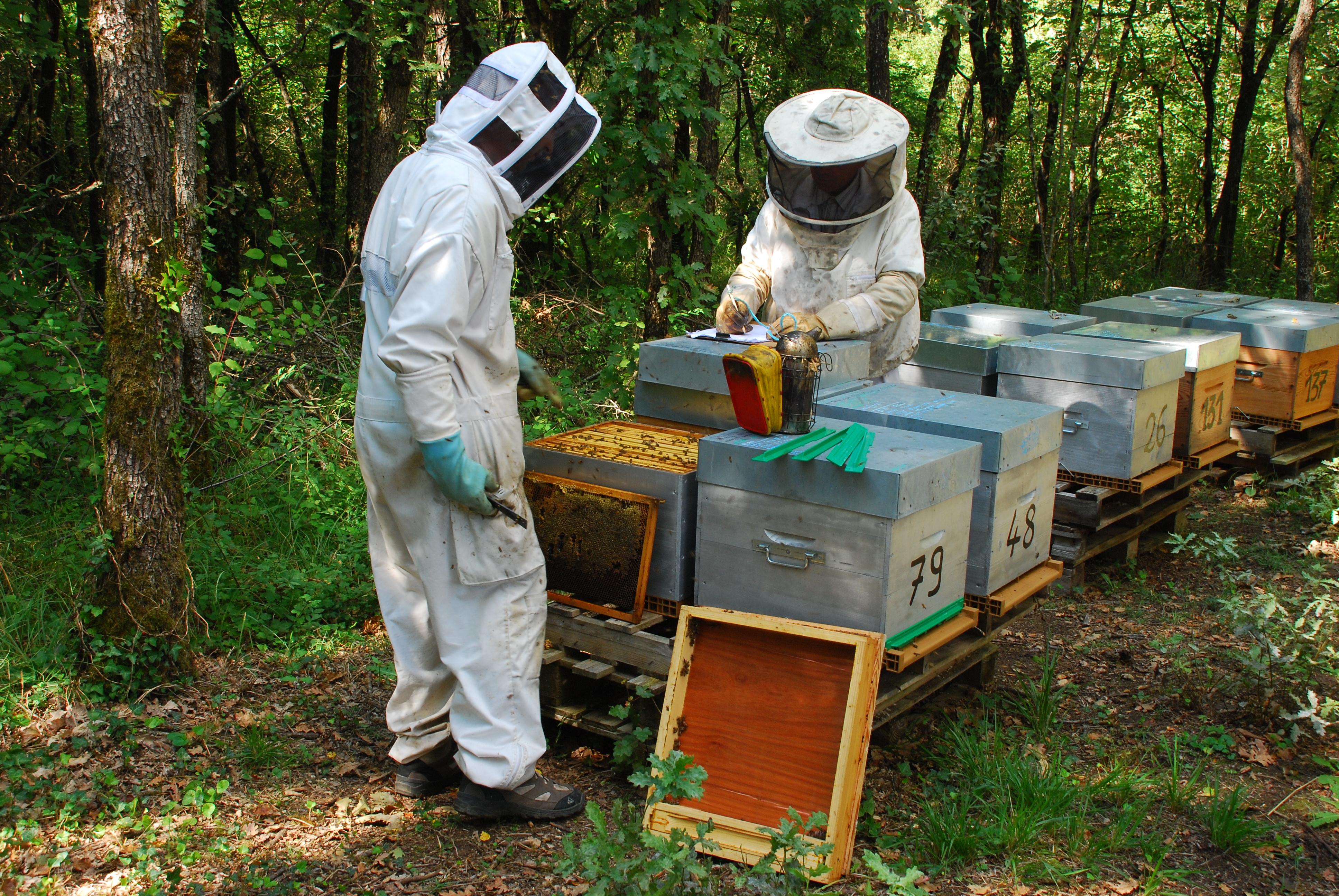 travail apiculteur ruches